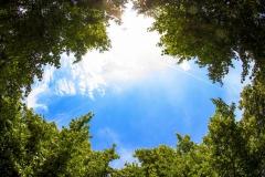 nebo-derevya-listya-oblaka
